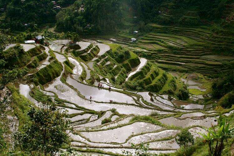 Rice Field Ha Giang