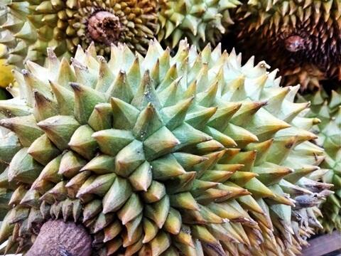 Vietnamese durian
