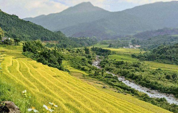 binh lieu rice field