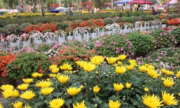 flower villages in vietnam