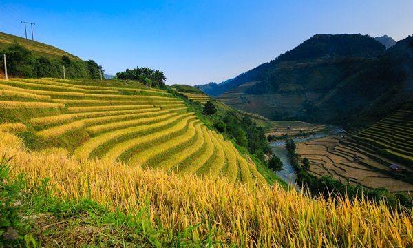 ha giang rice field
