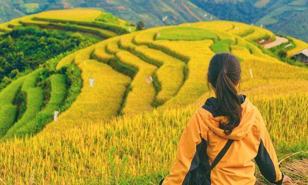 moc chau rice field
