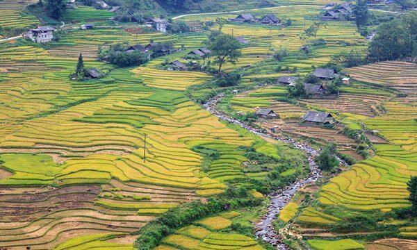 sapa rice field