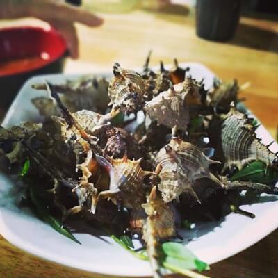 thorn sea snails
