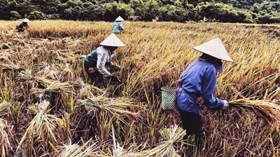 wear vietnamese hats